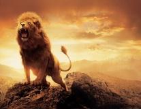Aslan roar lo res